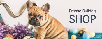 Franse Bulldog WebShop